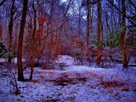 Snow in the Early Morning by ashkyler