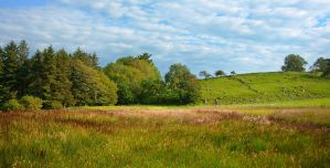 Ashlamaduff summer grasses, Ireland by younghappy