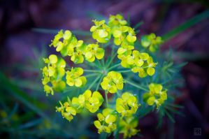 Magical Spring Forest Flower by FilipR8