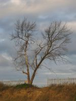 lonely tree by Martensik