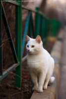 White Cat by Bagirushka