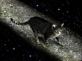 To the starry paths  of time.. by Isteelurfoodz