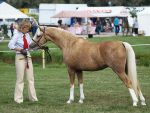 Welsh pony mare by wakedeadman