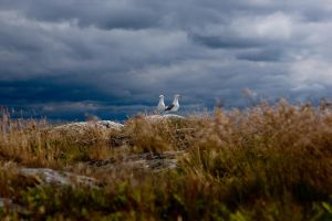 Albatros on a hill by dominik86