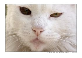 The white cat... 02 by mordoc