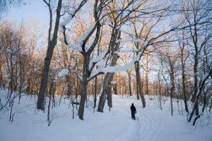 snowshoeing mn by FigoTheCat