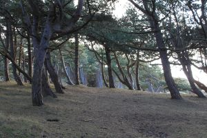 Formby - Woods1 by Tasastock