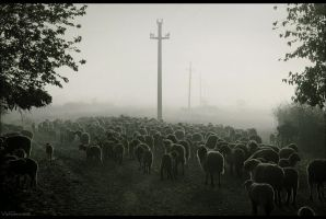 last moving of flocks by veftenie