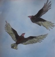 Turkey vulture couple by Mel-L92