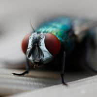 Fly - close-up by mesign