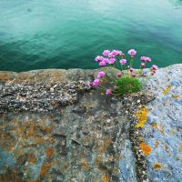 sea green and sea pinks by Blue-eyed-Kelpie