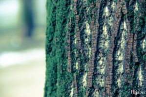 Tree by houssam6464