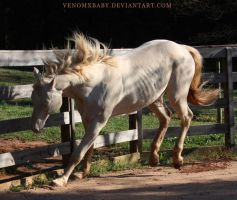 perlino stallion 9 by venomxbaby
