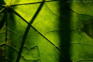 Veins by Toothrot