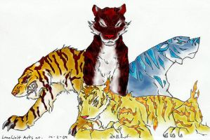 4 tigers by Tacet