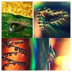 My Journey in Macro by GrotesqueDarling13