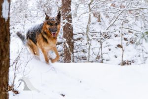 Grendel in the Snow by Force4Photos