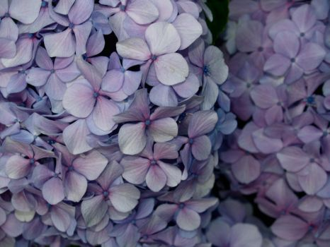Blue Pink and Purple Flowers by CatherineAllison