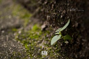 Life by thesarim1