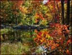 'Beaver Pond' by WaitingForTheWorms