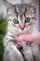 Not Another Kitten Picture by kayteachan