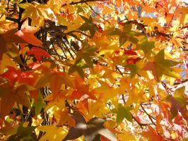 Amber Foliage by Indiliel