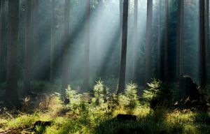 sun rays in forest by SvitakovaEva