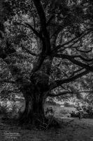 Tree of Life by SparkVillage