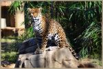 Jaguar Stock 4 by Vesperity-Stock