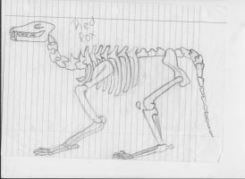 Red Fox Skeleton by JaDebuscus