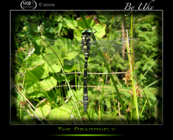 The Dragonfly by GoCobra