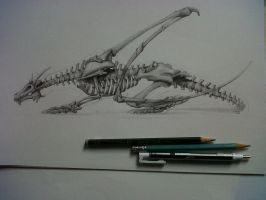 Anatomy of bones of a dragon by David De Leon Luis by Daviddleonluis