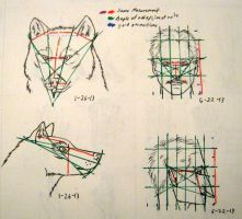 On werewolves - How to draw section preview by jmillart
