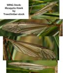 WING Stock - Mosquito Hawk by Treeclimber-Stock