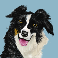 Collie by jcmoonfire123