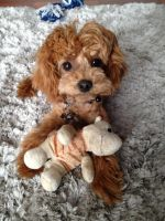 I Love My Toys by PoodleSchmoodle
