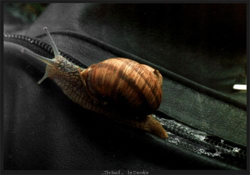The Snail by Dwor-kin