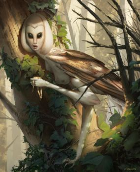 Lady Owl by Quentinvcastel