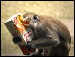 Garbage Monkey by aajohan