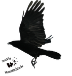 Cut-out stock PNG 18 - flying crow by Momotte2stocks