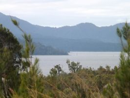View to Platypus Landing and Danbulla Forest by tablelander