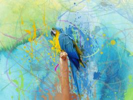 colourful parrot by colouroo
