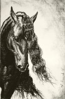 Friesian by DanaScully
