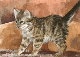 Inquisitive Kitten ACEO by Pannya