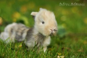 Rabbit baby - 8 by Pebels