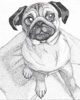Dotted Pug by cherryblossem