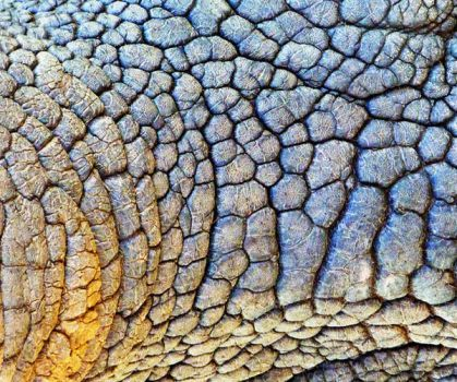 Abstract of Rhino by daisicalolliwog
