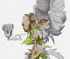 0825/png_plant by parkjelly