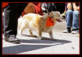 Parade Dog by TeaPhotography