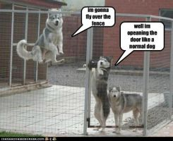 How To Escape: For Dogs by ncbela2